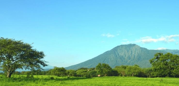 Padang Rumput yang ada Pepohonannya
