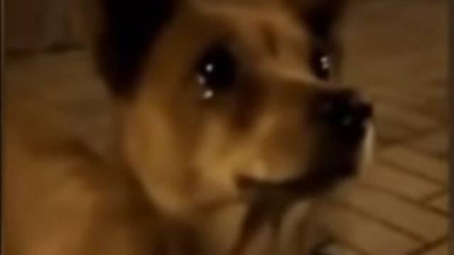 Nangis Potret Haru Anjing di Jalanan Menitikkan Air Mata saat Diberi Makan
