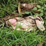 Diduga Dibuang Orang Tuanya, Warga Temukan Bayi Di Semak Kawasan Bukit Gombak