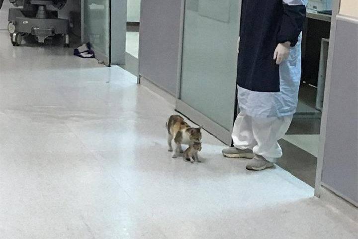 Kucing yg bawa anaknya yg sakit ke rumah sakit