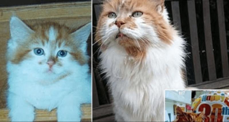 Kucing Tertua di Dunia Mati di Usia ke-32 Tahun, Meski Tidak Dicatat dalam Guinness World Record