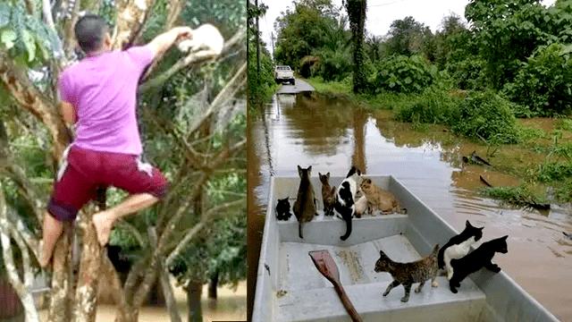 Viral Pria Selamatkan Kucing Terjebak Banjir, Aksinya Tuai Pujian 1