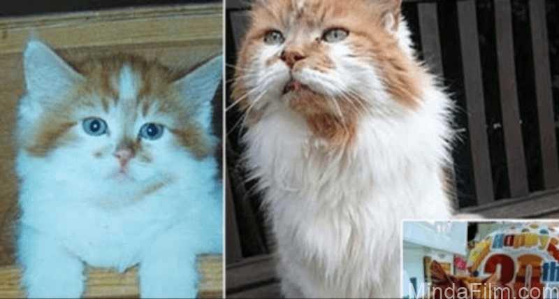 Kucing-Tertua-di-Dunia-Mati-di-Usia-ke-32-Tahun-Meski-Tidak-Dicatat-dalam-Guinness-World-Record